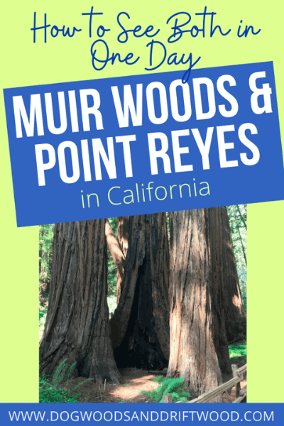 visiting point reyes and muir woods