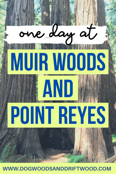 visiting muir woods and point reyes