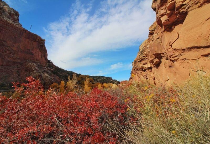 red & yellow greenery in desert
